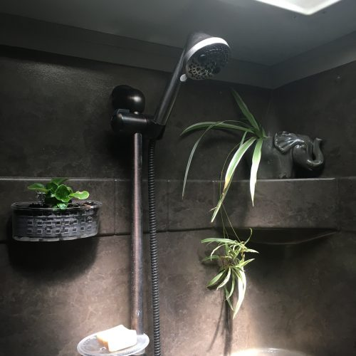 plants in RV shower