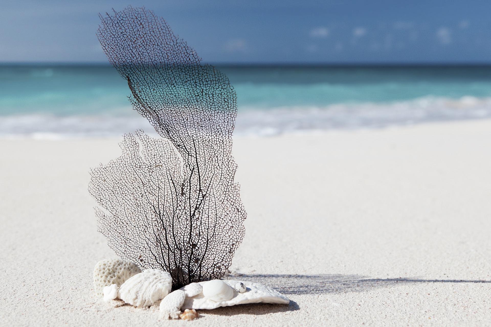 Beach Themed Decor Ideas for Your RV Bedroom