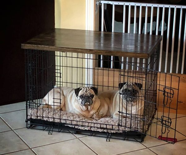 Dog crate with wood top added to create a side table