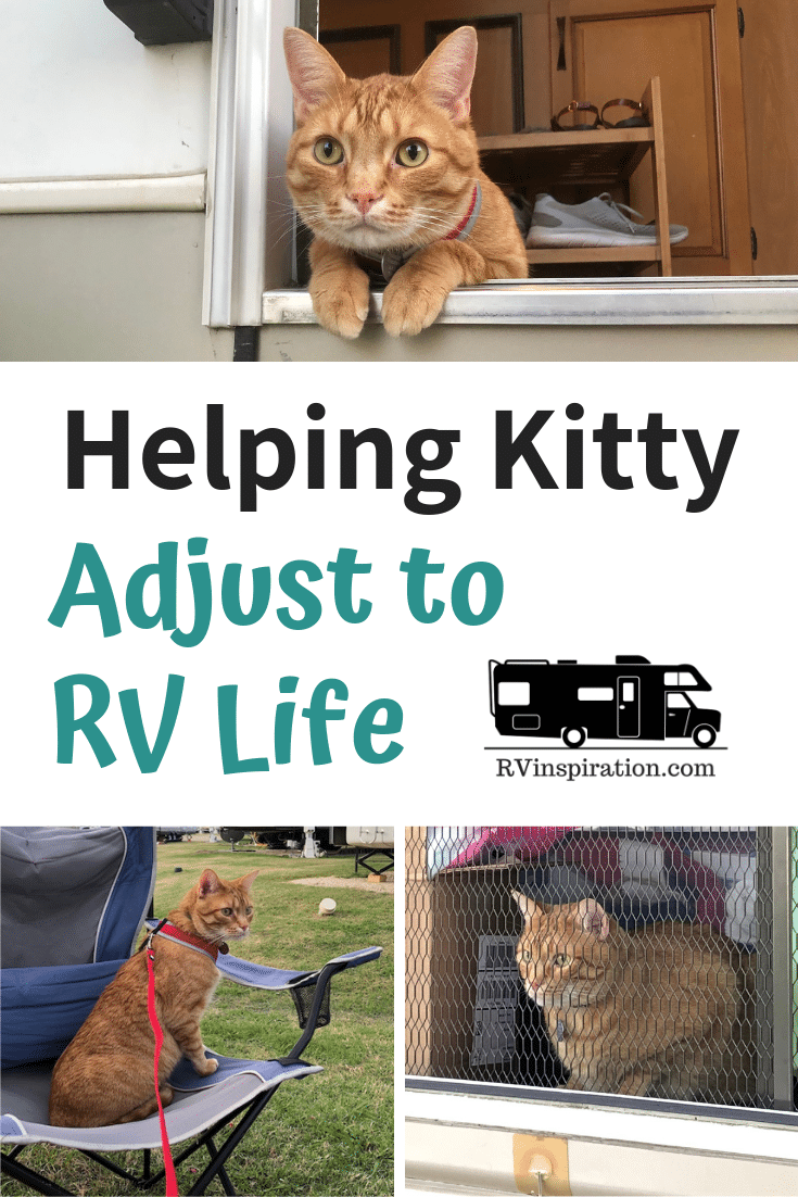 Ideas for travel enclosures, catios, kitty tents, and other ways you can help your cat enjoy traveling in a camper or motorhome