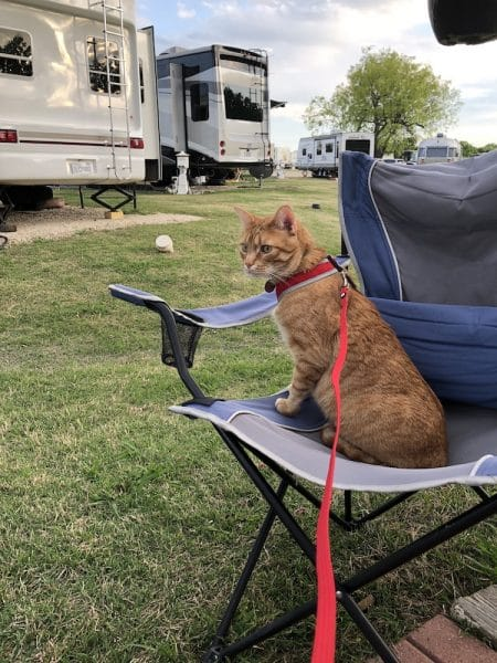 Our kitty enjoying some fresh air sitting in a lawn chair in an RV park