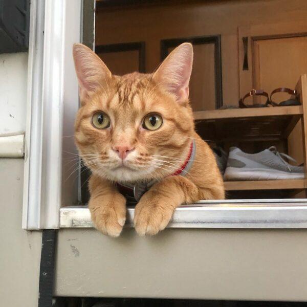 Kitty sitting in doorway