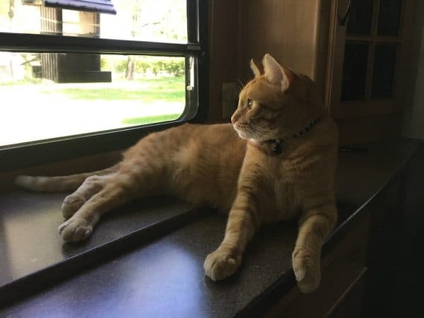 Cat looking out window of RV