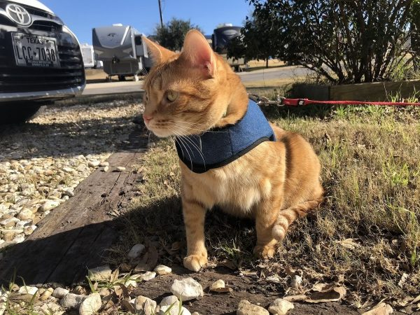 Kitty Holster cat harness for leash training